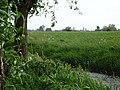 Naturschutzgebiet Hetter-Millinger Bruch PM18-22 Megchelen NL.jpg