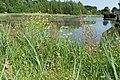 Natuur De Kroeten P1140779.jpg