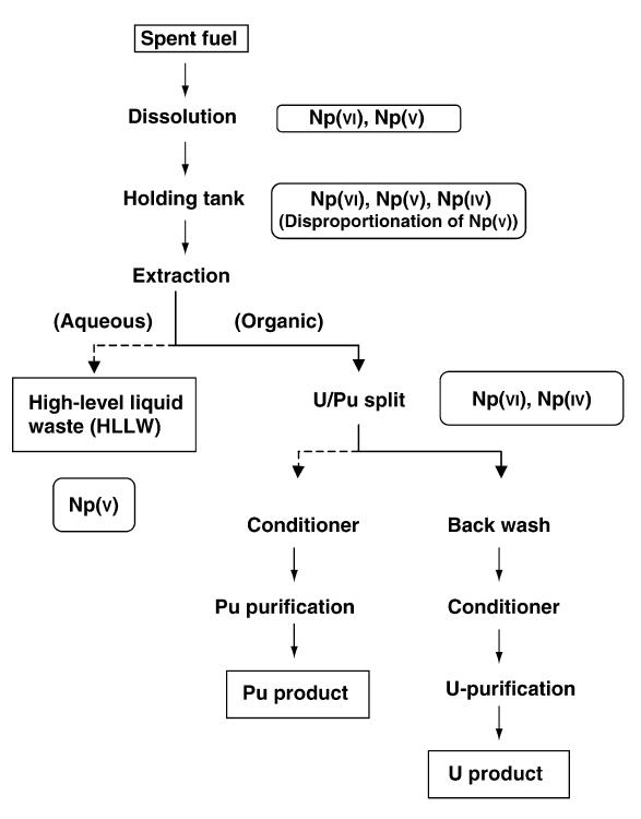 Neptunium Purex process