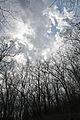 Nerstrand-Big Woods State Park (468641682).jpg