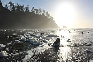 Neskowin Ghost Forest - Image: Neskowin Ghost Forest 2016