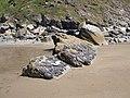 Ninney Rocks (1) - geograph.org.uk - 529712.jpg