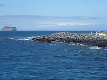 Nord Seymour Isola Nelle - Isole Galápagos.