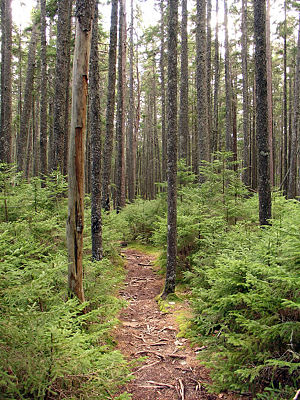 Norumbega Mountain, Acadia National Park, Maine
