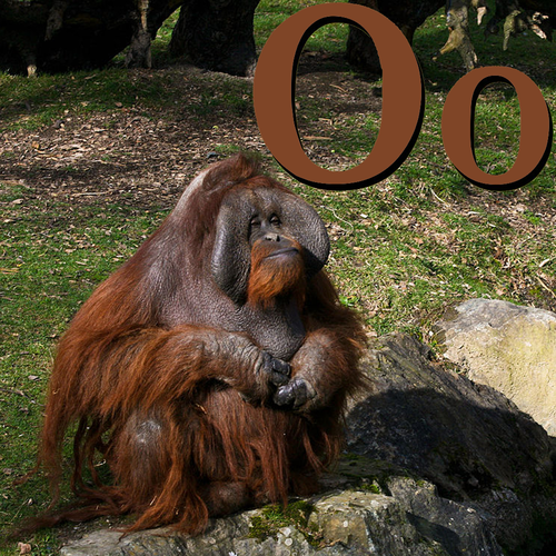O is for Orangutan.png