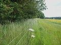 Obelisk Park hedgerow - geograph.org.uk - 1353908.jpg