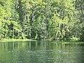 Ocala Silver River08.jpg