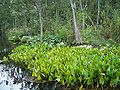 Ocala Silver River flower01.jpg
