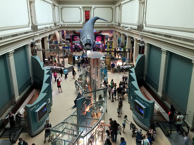 File:Ocean Hall Smithsonian Museum of Natural History.jpg