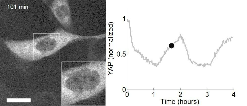 Optogenetics Wikipedia