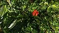Orange Flower (25478849304).jpg