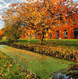 Eutrophication - Eutrophication in a canal