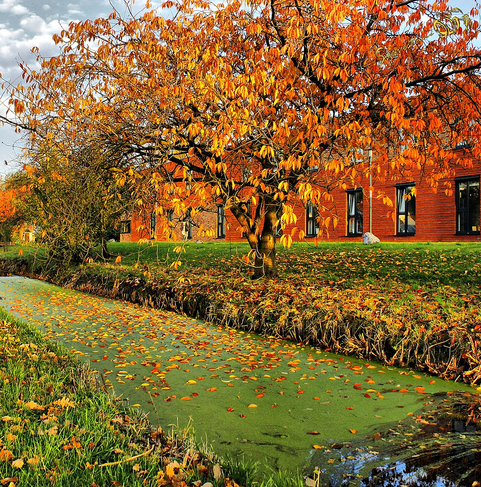 Orange like Autumn