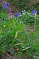 Orchid, Bluebells and Ramsons in Garston Wood - geograph.org.uk - 408694.jpg