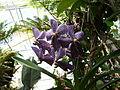 Orchidaceae.2634.JPG