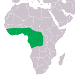 Range of the Dwarf Crocodile in green