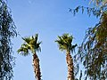 PALMS (12139516293).jpg