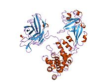 Bacterial Toxin In  Letters