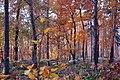 POL-Rezerwat przyrody Buczyna nad Słupią DSC 0365.JPG