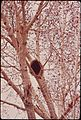 PORCUPINE IN TREE GREAT SAND DUNES NATIONAL MONUMENT - NARA - 544932.jpg