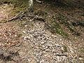 PP Biskoupky, drť kamení.jpg
