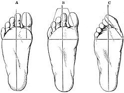 skostørrelser cm voksne
