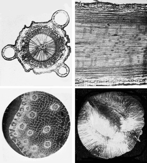 PSM V61 D156 Four examples of microphotography of various objects.png