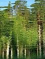 Palanga Botanical Park. Reflections. 2018(2).jpg