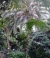 Palmiarnia Zielonogórska - środek7.jpg