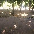 Pandam Wildlife Park, Jos.jpg