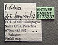Paratrechina pubens casent0173237 label 1.jpg