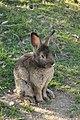 """Parcul de Animale - """"Moara de Vant"""" (8110147977).jpg"""