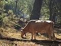 Parque nacional de Peneda-Gerês (37640041111).jpg