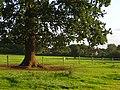 Pasture, Sulhamstead - geograph.org.uk - 966051.jpg