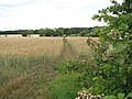 Path to Ditchingham - geograph.org.uk - 1405673.jpg