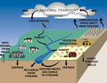 Pathways of pesticide movement in the hydrologic cycle.png