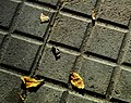 Pavement with Fallen Leaves.jpg