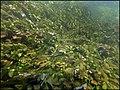 """Paysage subaquatique Subaquatic landscape rivière """"Les Baillons"""" à Enquin-sur-Baillons F Lamiot 17.jpg"""