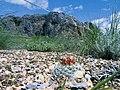 Pediocactus simpsonii fh 38 13 NV B.jpg