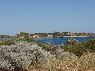 Penguin Island (Western Australia) - Image: Penguin Island From WA