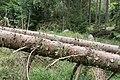 Petersminde (Norddjurs Kommune).Langdysse.5.47522.ajb.jpg