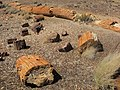 Petrified Forest National Park 6.jpg