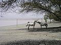 PferdeLangano08.jpg