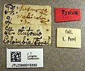 Pheidole susannae jtlc000015332 label 1.jpg