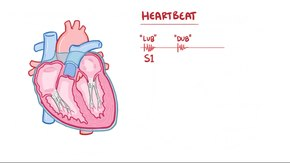 File:Physiology of cardiovascular system.webm