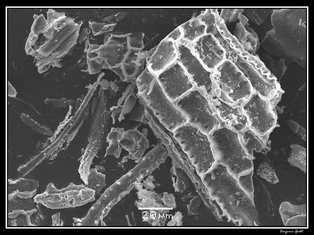 File:Phytolithes observés au Microscope Electronique à Balayage 02.jpg