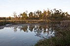 Pickerington Ponds-Ellis Pond in Fall 2.jpg