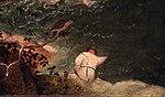 Pieter bruegel il vecchio, caduta di icaro, 1558 circa 08.JPG