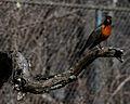 Pittsburgh Zoo (4509853686).jpg