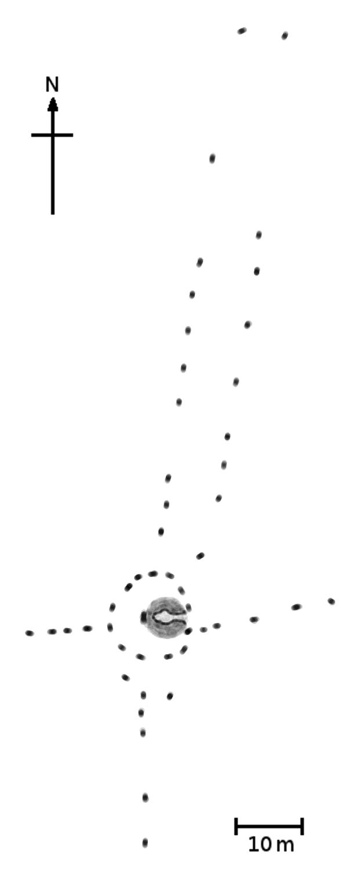 Plan of the Callanish Stones